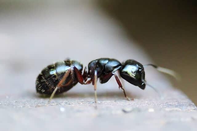 Beliebt Bevorzugt Was tun bei Ameisen im Gewächshaus [Ratgeber] &FX_91